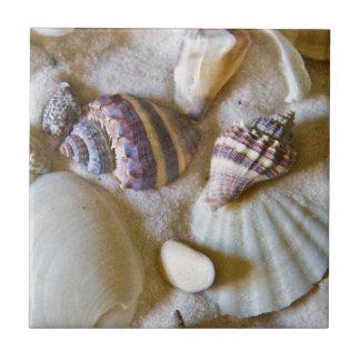 Beach Shells Theme #2 Tile