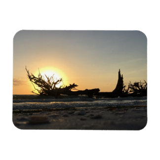 Beached Driftwood at Sunset Magnet