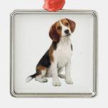 Beagle #1 - A