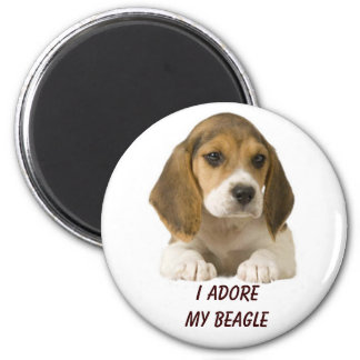 Beagle Adore Magnet