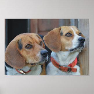 Beagle Best Friends Poster