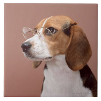 Beagle Ceramic Tile