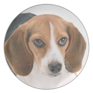 """Beagle"" design kitchenware Plate"