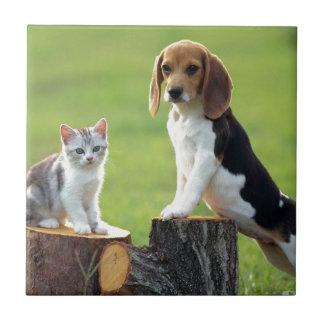 Beagle Dog And Grey Tabby Kitten Ceramic Tile