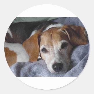 Beagle-Harrier Dog Classic Round Sticker