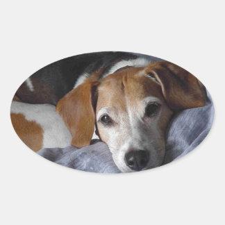 Beagle-Harrier Dog Oval Sticker