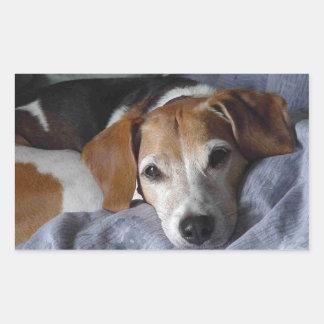 Beagle-Harrier Dog Rectangular Sticker