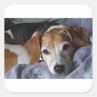 Beagle-Harrier Dog Square Sticker