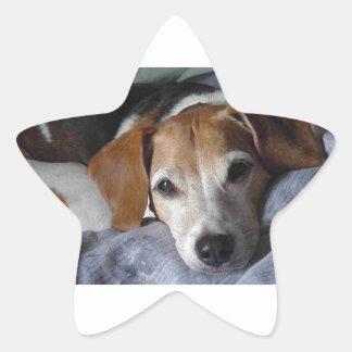 Beagle-Harrier Dog Star Sticker
