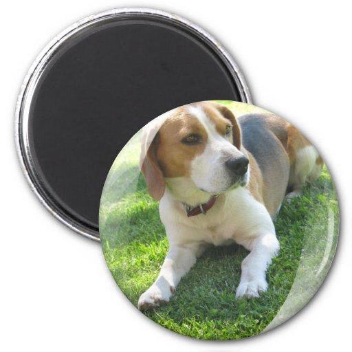 Beagle Hound Dog Round Magnet Refrigerator Magnets