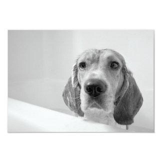 Beagle in the Bathtub 3.5x5 Paper Invitation Card