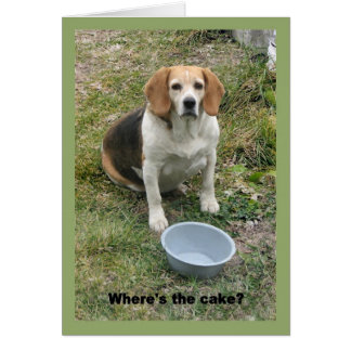 Beagle looking up from her food bowl. card