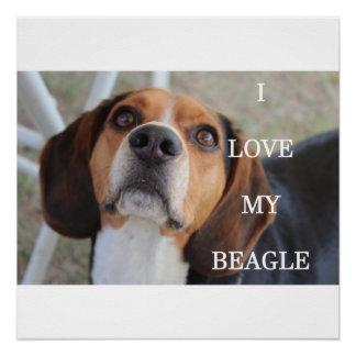 beagle love w pic black red white poster