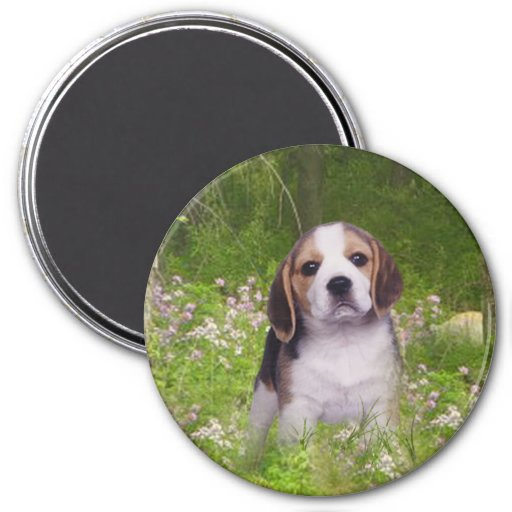 Beagle Magnet In Forest