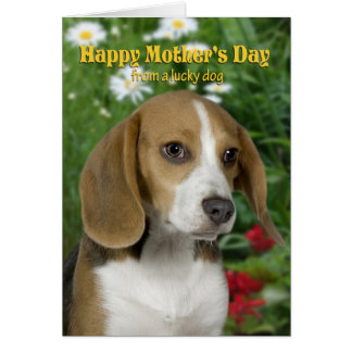 Beagle Mother's Day Card