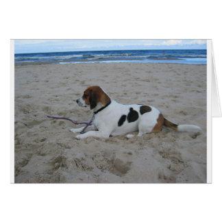 Beagle on beach.png card