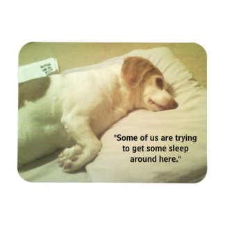 """Beagle Photo """"Trying to Get Some Sleep"""" 3x4 Magnet"""