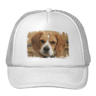 Beagle Pictures Baseball Hat