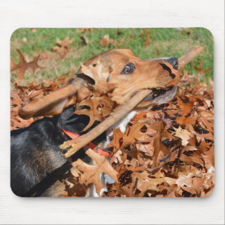 Beagle Playing With Stick In The Leaves Mouse Pad
