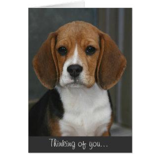 Beagle Portrait Card
