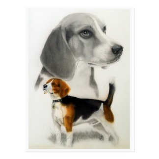 Beagle Post Cards