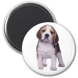 Beagle Pup Magnet