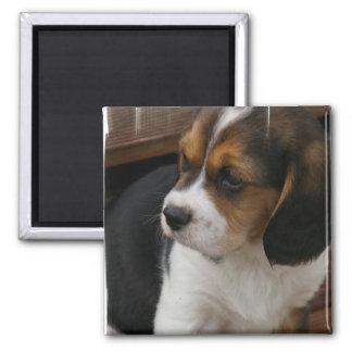 Beagle Pup Square Magnet