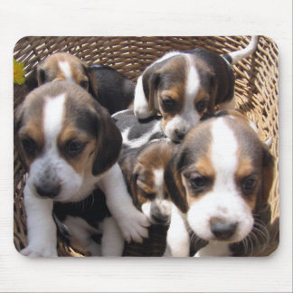 beagle puppies mouse pad
