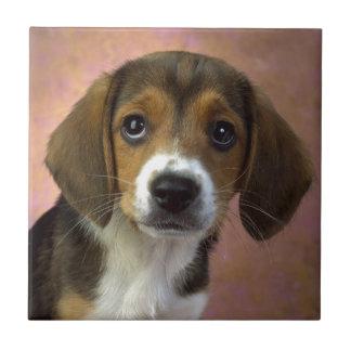 Beagle Puppy Dog Ceramic Tile