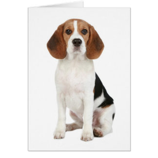 Beagle Puppy Dog Hello Thinkng of You Card