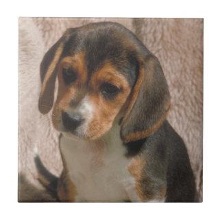 Beagle Puppy Tile