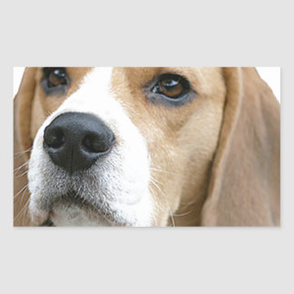 beagle rectangular sticker