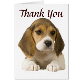 Beagle Thank You Card