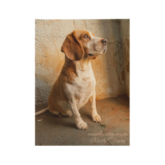 Beagle Wood Poster