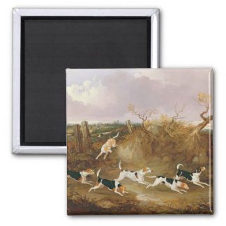 Beagles in Full Cry, 1845 (oil on canvas) Square Magnet