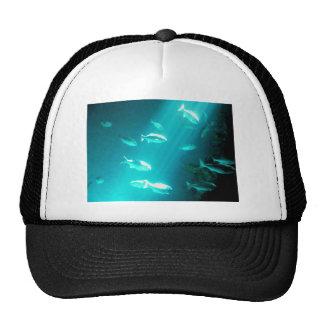 Beam of Light Underwater Fish Swimming Hats