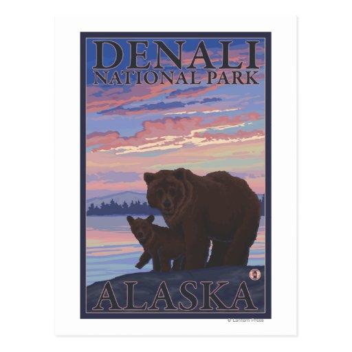Bear and Cub - Denali National Park, Alaska Postcards