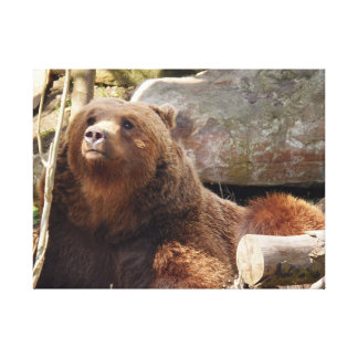 Bear at the zoo canvas print
