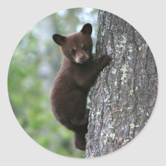 Bear Cub Climbing a Tree Round Sticker