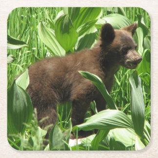 Bear Cub Yosemite Square Paper Coaster