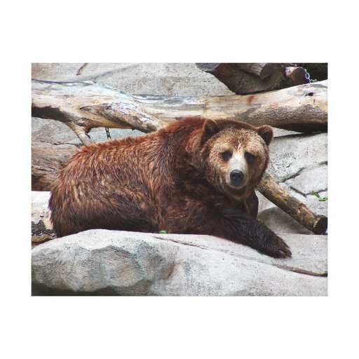 Bear on rock stretched canvas prints