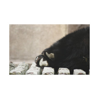 Bear paws on canvas gallery wrapped canvas