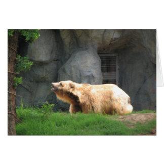 Bear  photo taken by tina greeting card