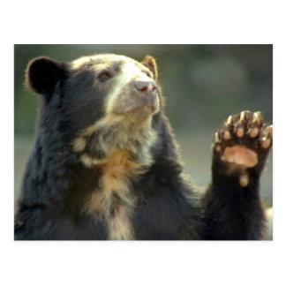 bear post cards