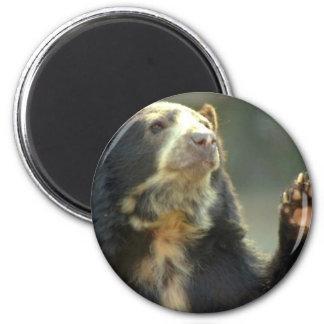 bear refrigerator magnets