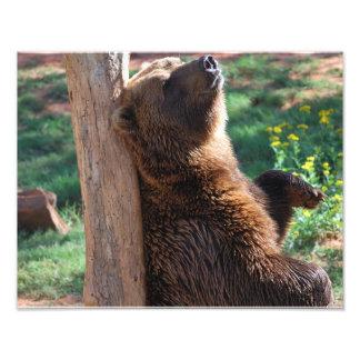Bear Scratching Photograph