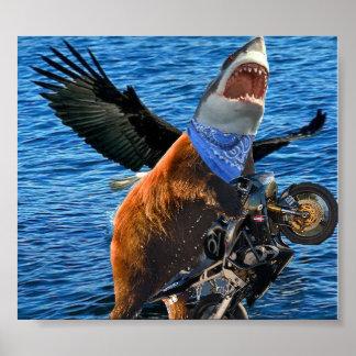 bear shark poster