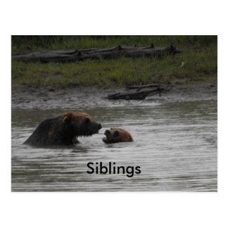 Bear Siblings Postcard