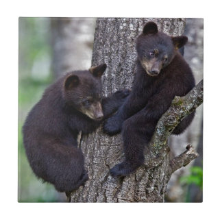 Bear Twins Tree Climbing Branches Cute Animals Art Tile