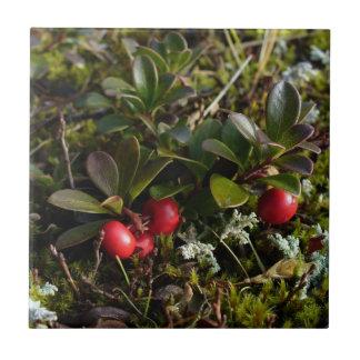 Bearberry, Arctostaphylus uva-ursi Tile